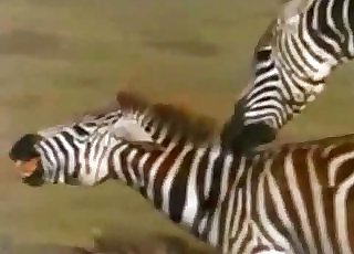 Amazingly intense bestiality in this compilation