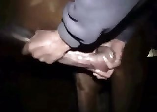 Male is blowing a big cock of a pony